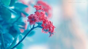 SYNAESTHESIA: Cảm giác kèm – những điều cần biết (phần 2) - blog của ThS. Phan Nguyễn Khánh Đan