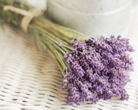 7 mùi hương giúp thư giãn - Hương Lavender - Phan Nguyễn Khánh Đan