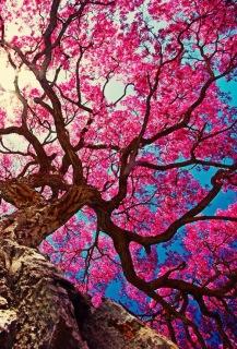 Nghệ thuật ra quyết định thông minh và sáng suốt - Phan Nguyễn Khánh Đan 2016 08 06
