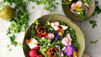 TOP 12 LOÀI HOA *ĂN ĐƯỢC* bạn có thể trồng ngay trong vườn nhà mình - blog ThS. Phan Nguyễn Khánh Đan